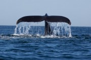 Trekurious and Simplifly Partner to Launch Sri Lanka's First Aerial Whale Watching Experience